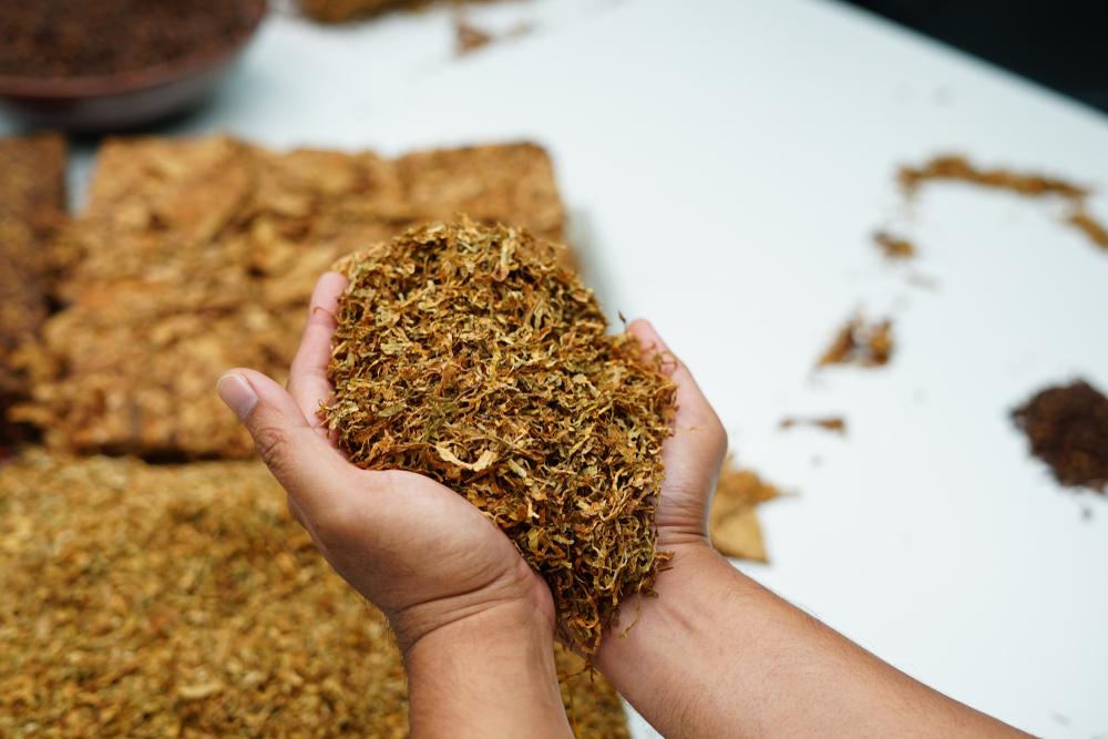 A suplementação de cálcio e enxofre pode ajudar no crescimento do fumo de qualidade. (Fonte: Shutterstock)