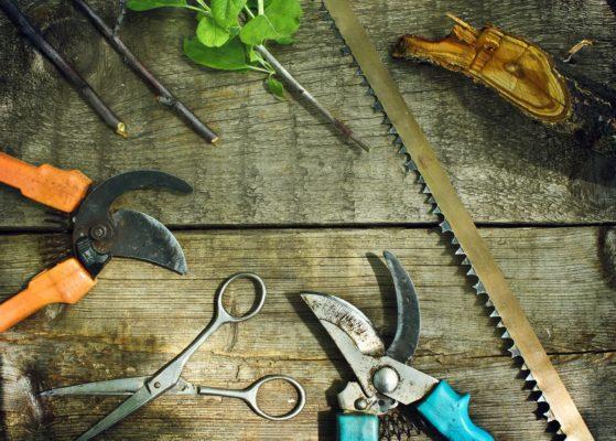 Инструменты необходимые для обрезки деревьев и кустарников