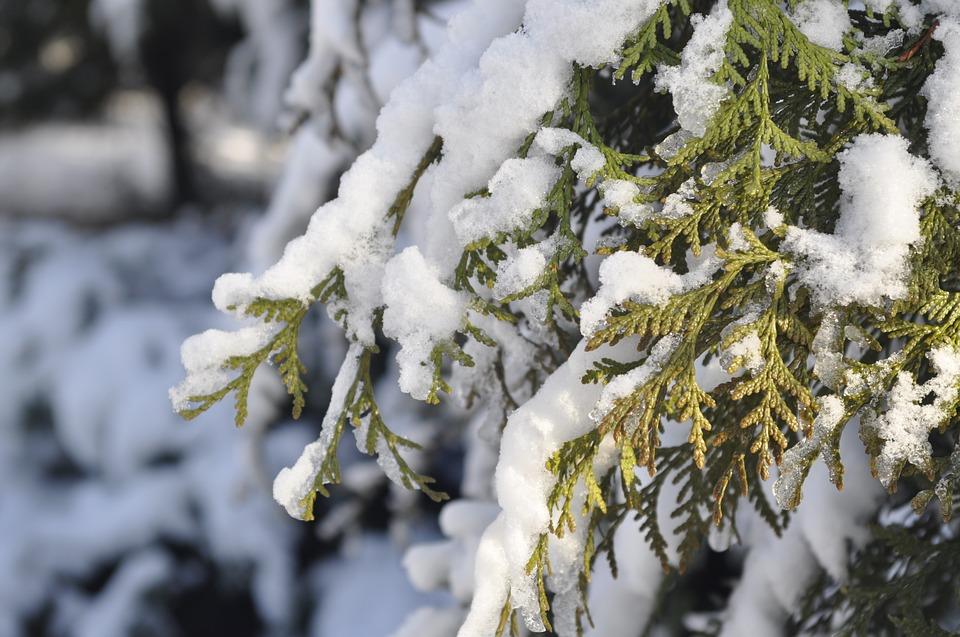 winter-1815530_960_720.jpg