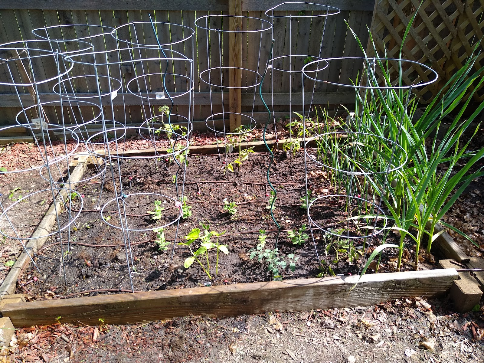 raised bed victory garden image