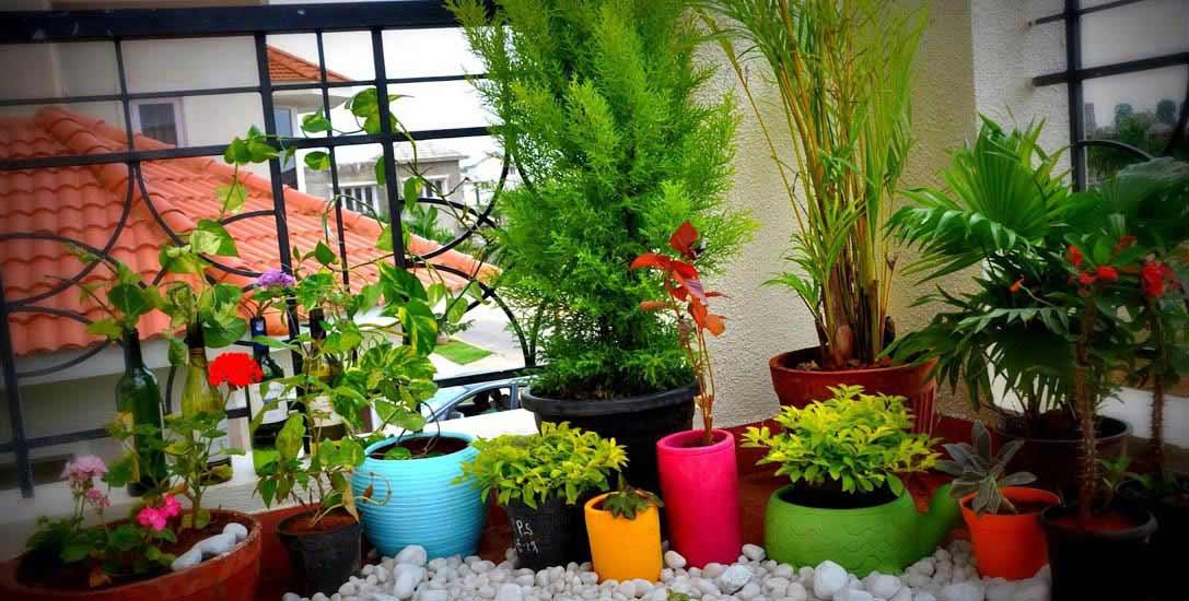 Tips For Home Gardening In Small Spaces Plants Care