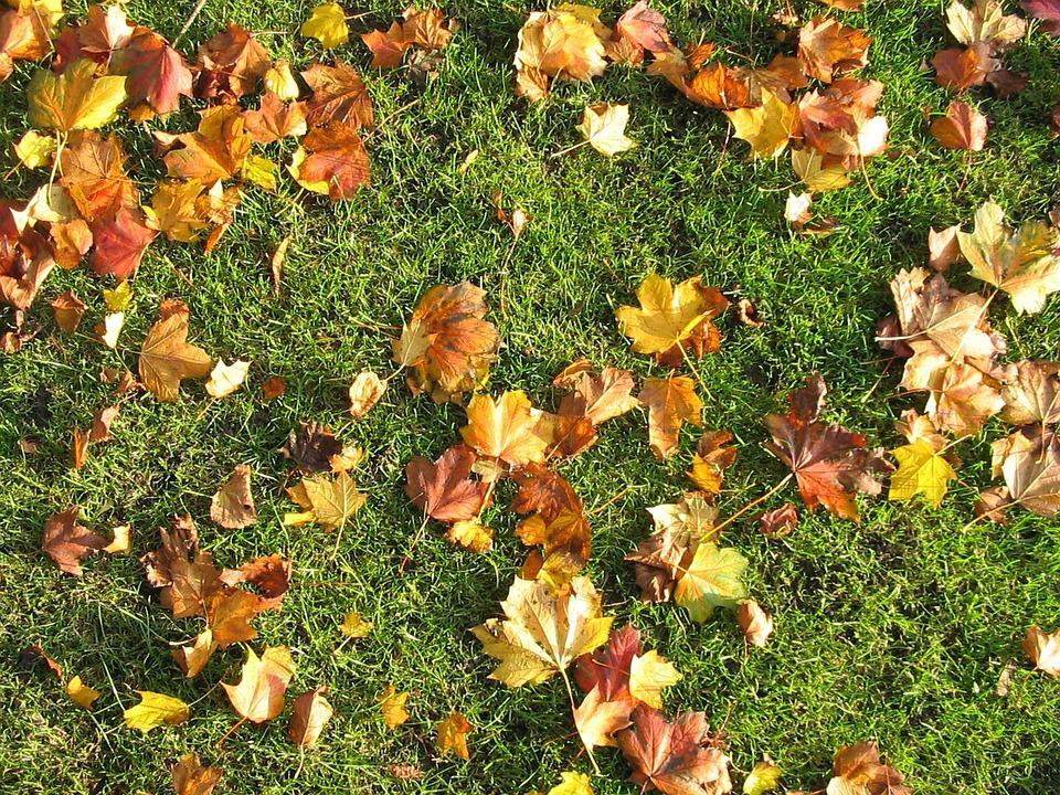 brown-1670_960_720.jpg