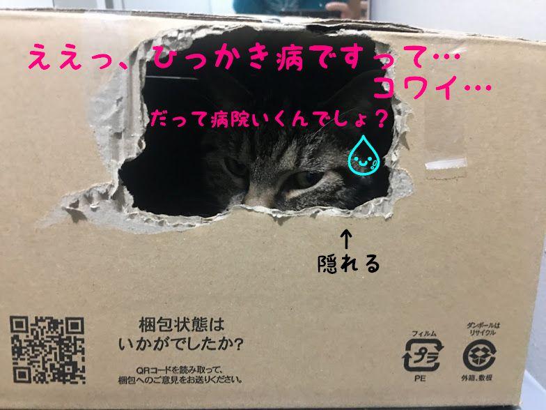 猫のひっかき傷からなる病気?【猫ひっかき病】の原因と早く治す方法!