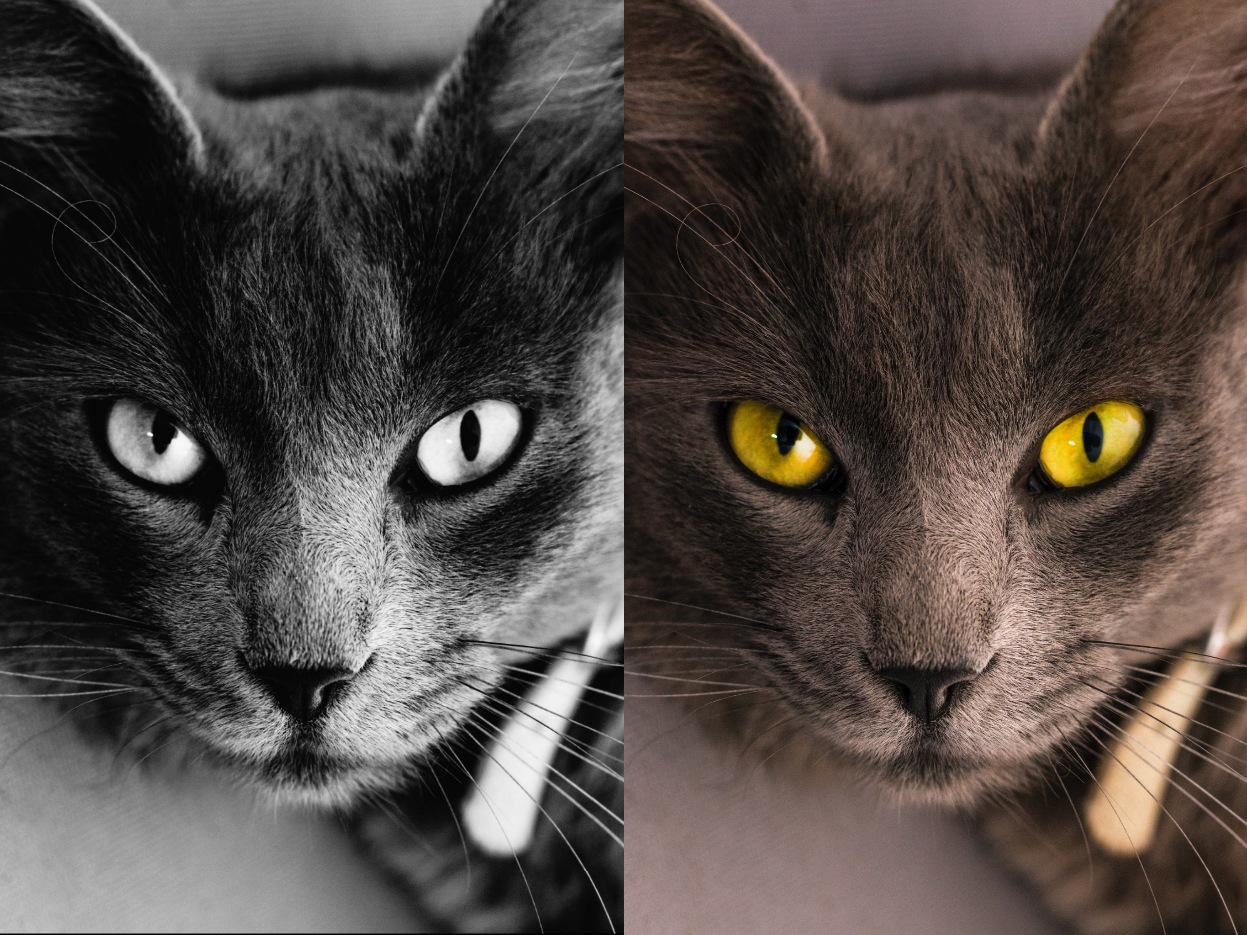 colored and black and white cat