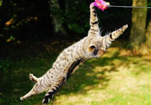 Why do cats like to eat string