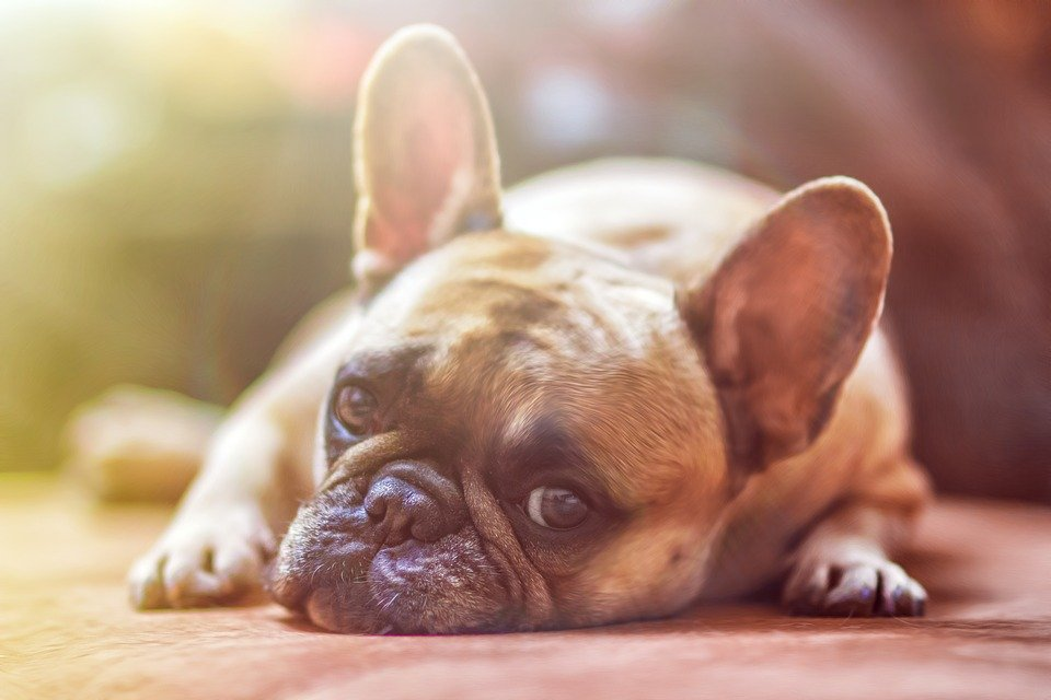 7 Most Common Dog Health Problems