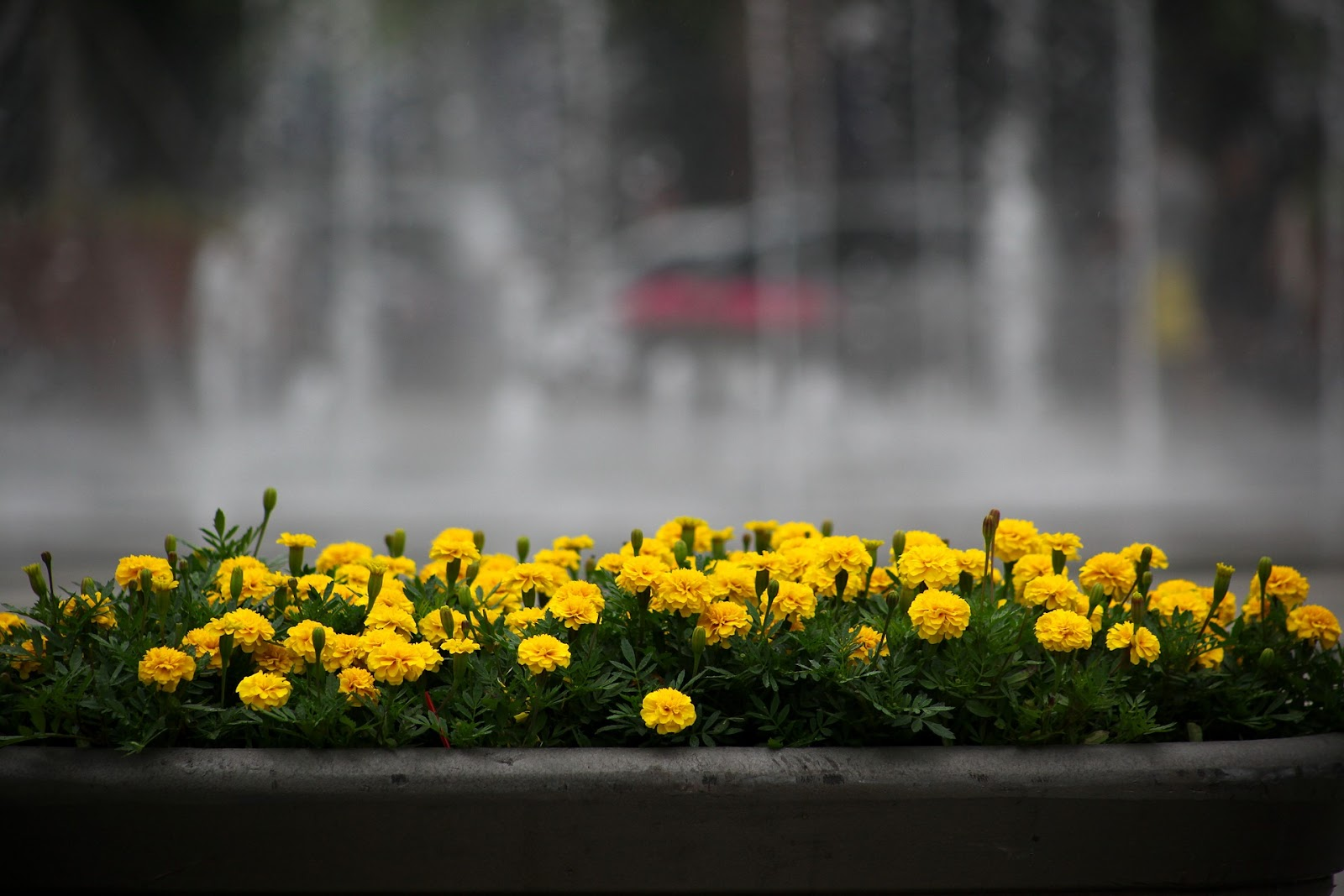 flowers-3386336_1920