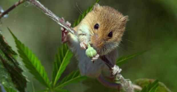 Как марихуана действует на животных семена конопли в сочи купить