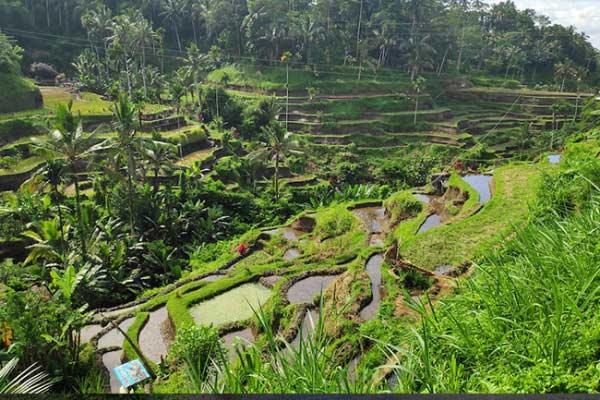 مراتع زیبای بالی