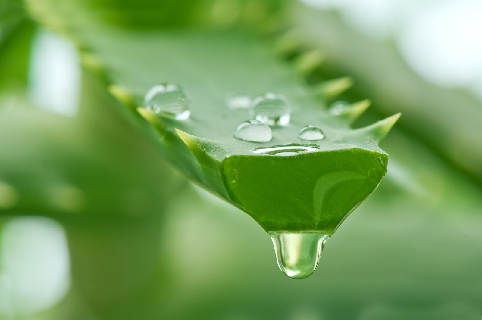 Aloe-vera-for-skin__1605063864.jpg