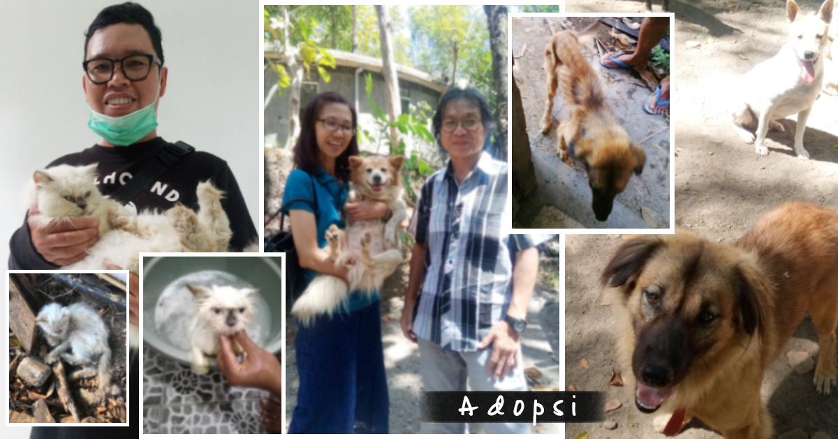 Cerita Adopsi, kondisi sebelum dan sesudah, serta senyum bahagia para satwa