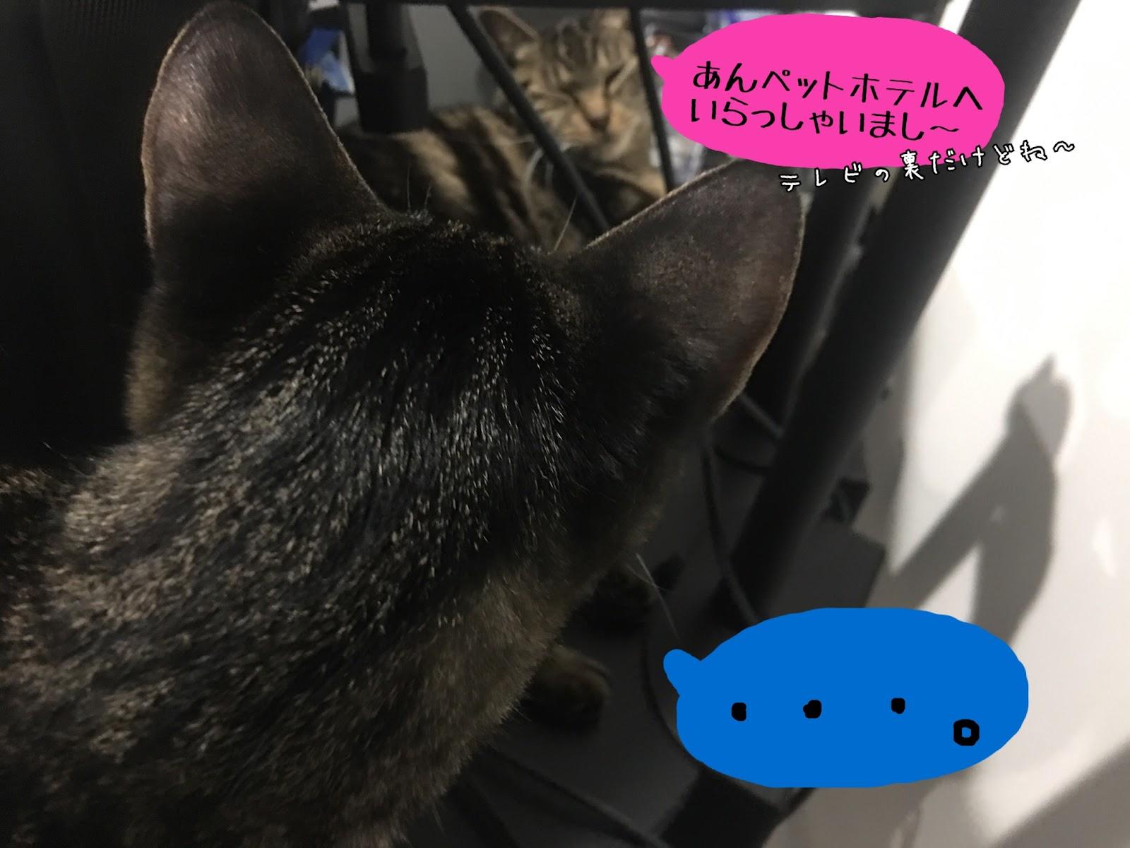 家を空けなければいけない時の飼い猫の預け先について