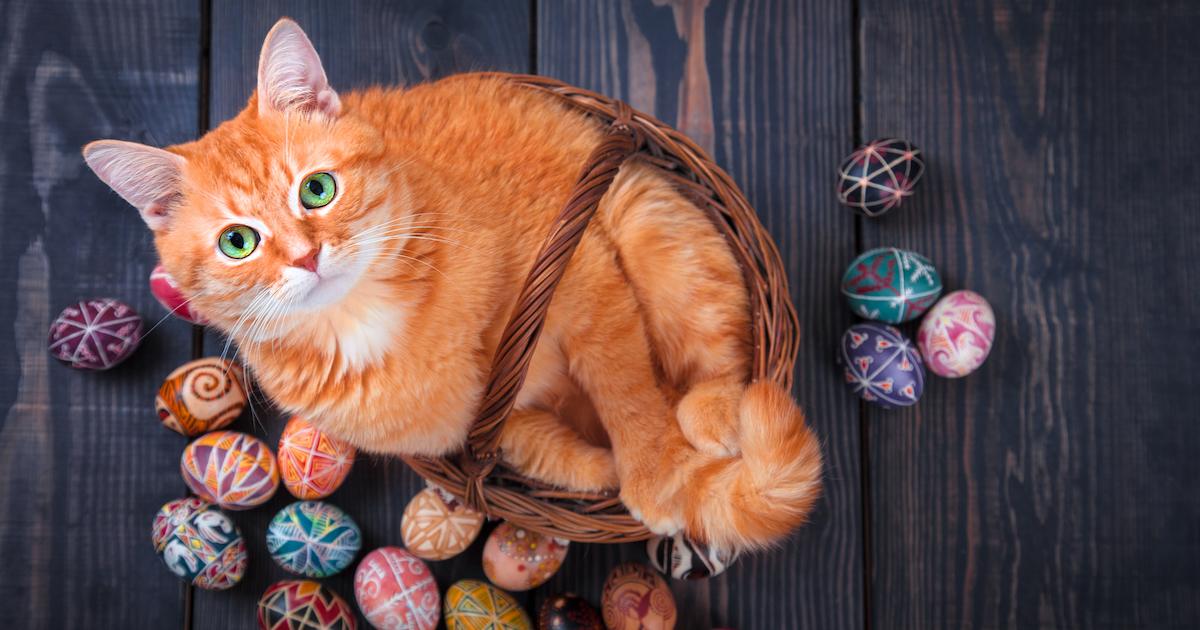 Cute cat lying in a basket of eggs