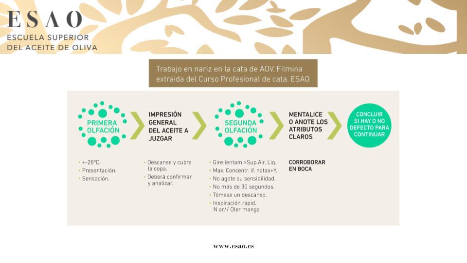 Infografía Trabajo en nariz en Cata de Aceite de Oliva