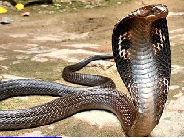 Kết quả xổ số sẽ về con gì nếu nằm mơ thấy rắn