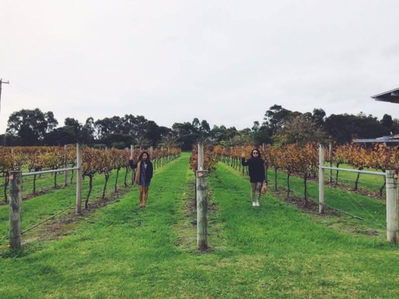 wineriesmargaretriver.jpg