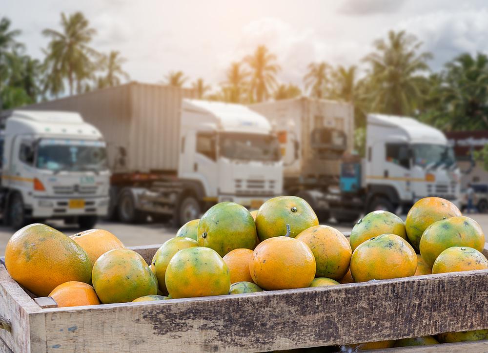 Após enfrentar dificuldades nas exportações para a União Europeia, lavouras de laranja sofre com forte calor e período de estiagem. (Fonte: Shutterstock)