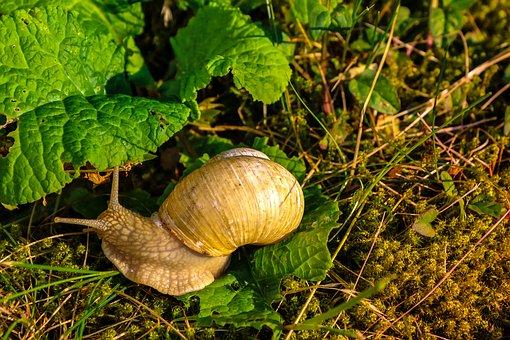 https://cdn.pixabay.com/photo/2018/06/01/22/59/nature-3447449__340.jpg