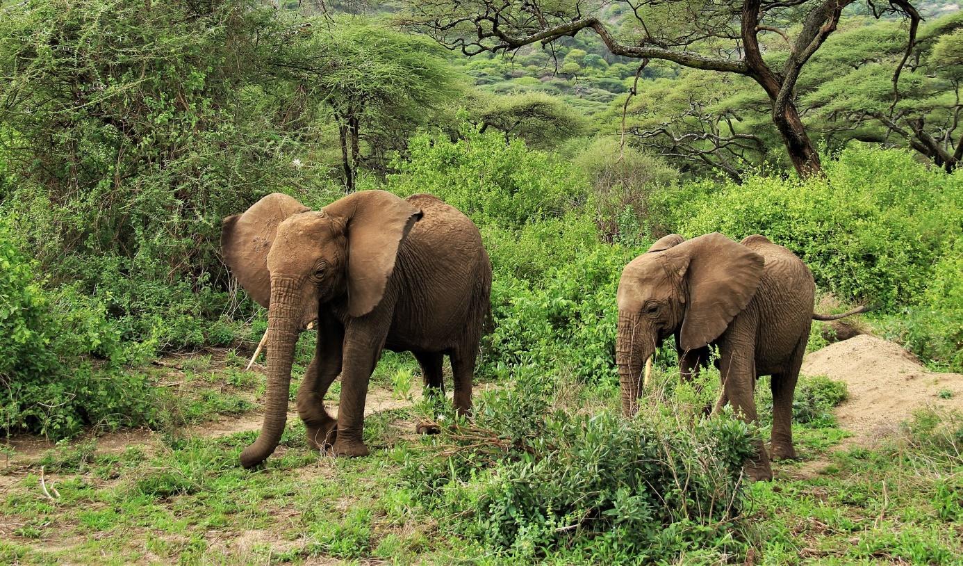 D:\SLIKE\PUTOVANJA\Kenija i Tanzanija 2017\Globeiq izbor\IMG_2682f1.jpg