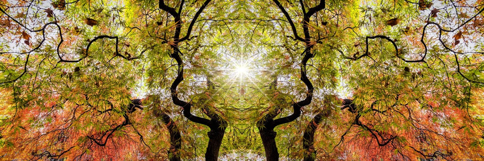 TreeMirror-Edit.jpg