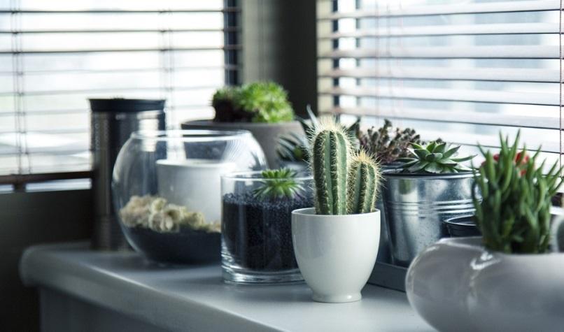 Macetas, Plantas, Cactus, Suculento, Plataforma