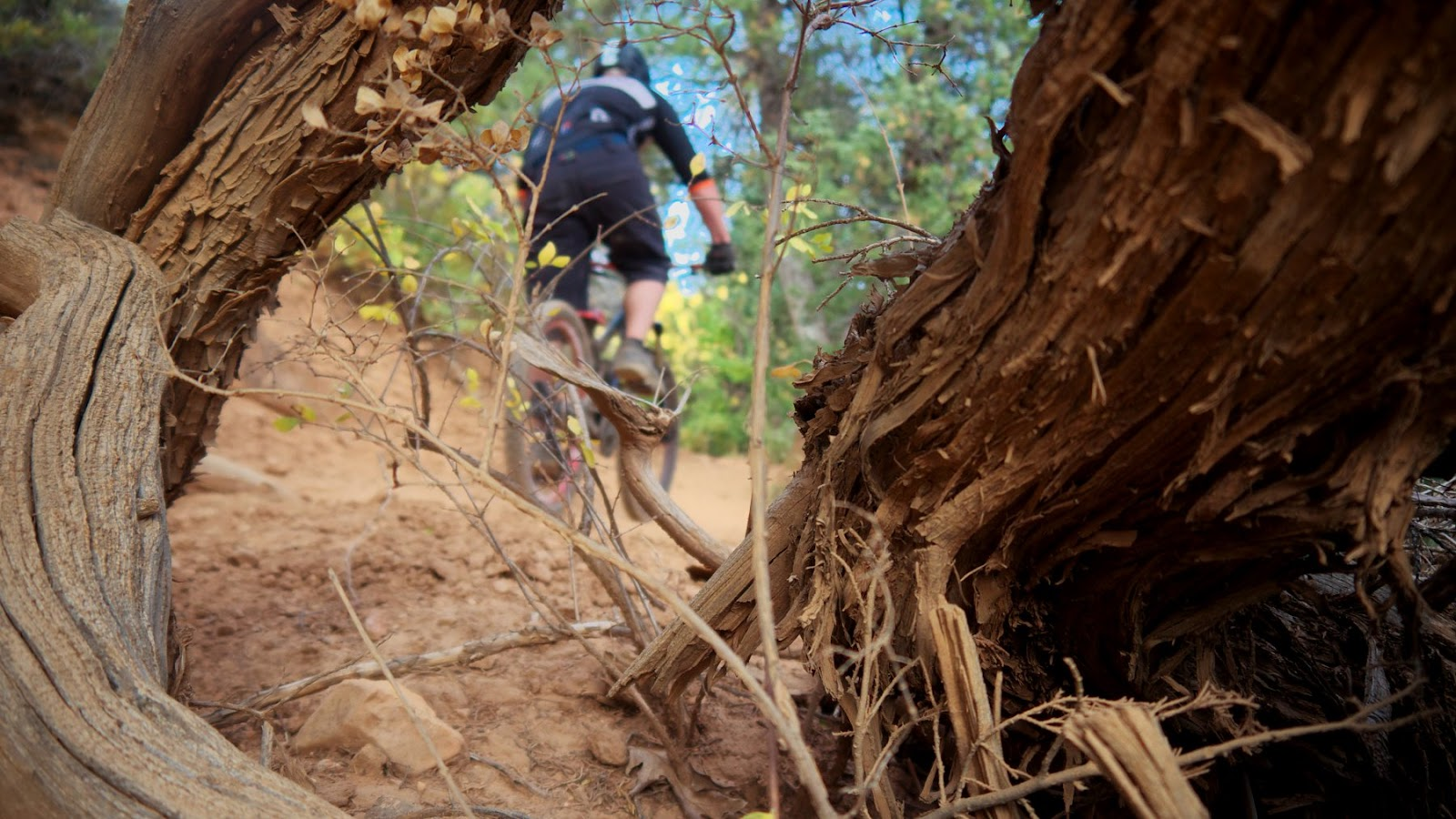 wardsworth creek trail.jpg