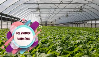 polyhouse farming