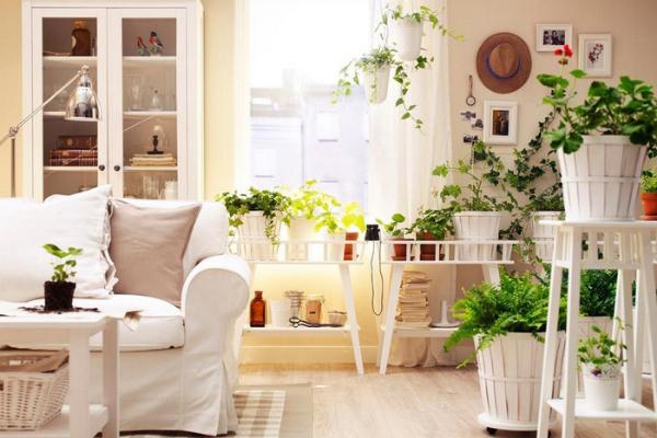 5 nguyên tắc cần nhớ khi trồng cây trong phòng ngủ