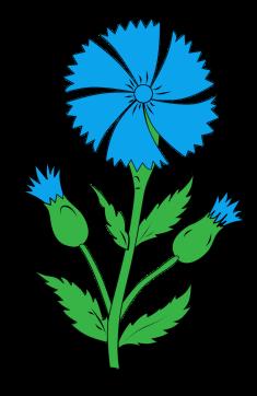 Image result for картинка для детей василек