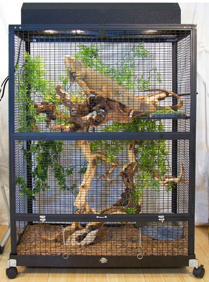 Image result for green iguanas cage
