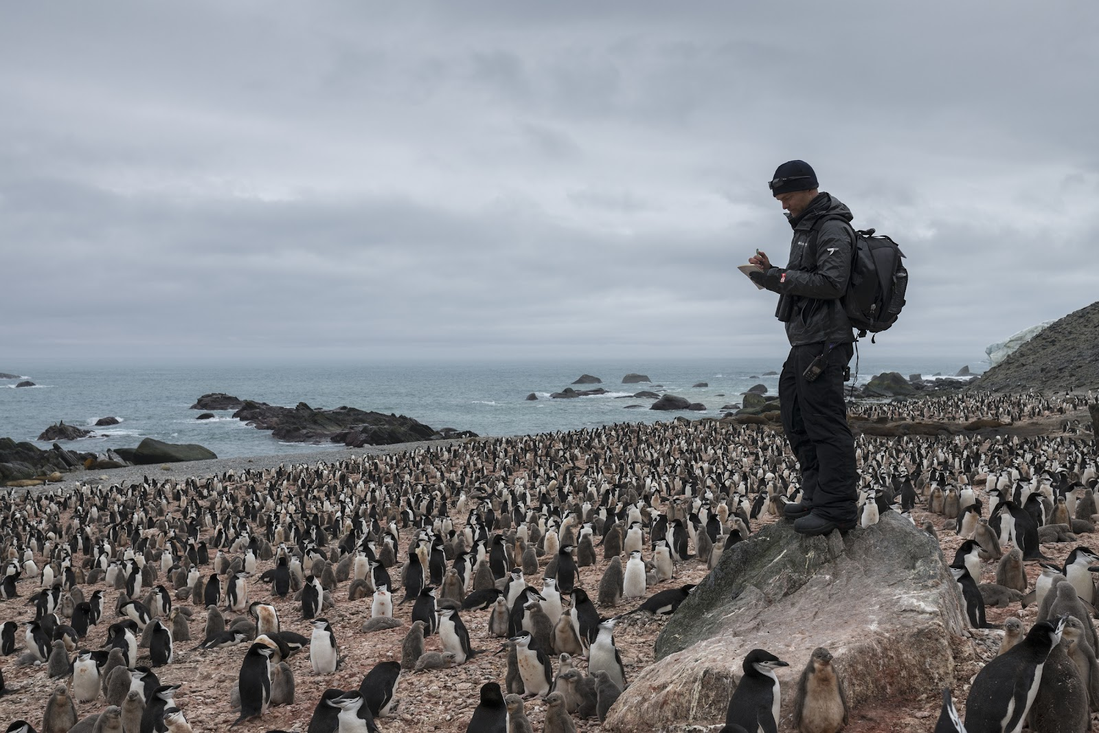 Counting penguins, Antarctic, Chinstrap penguins, Noah penguin researcher, science in the Antarctic