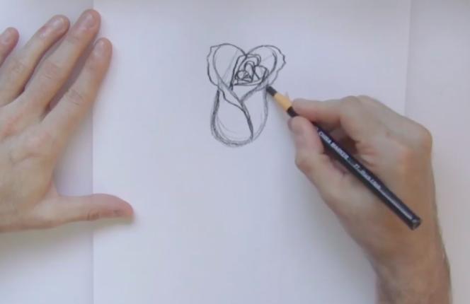 beginning of rose sketch