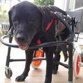 C:UsersuserDesktopTomomi2カット済み大型犬LL4輪579.jpg