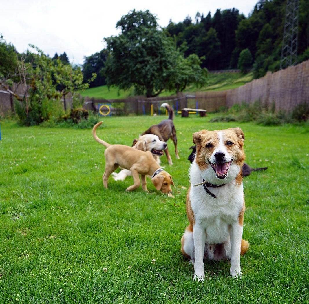 dog pack.jpg