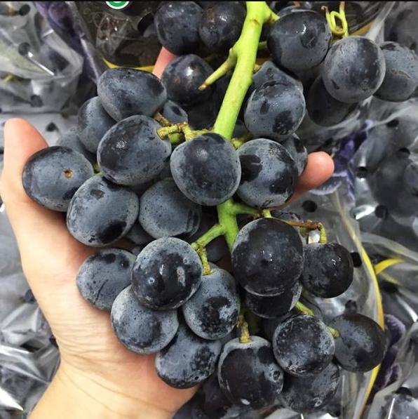 Nho đen không hạt được ưa chuộng vì khi ăn bạn sẽ không cần bỏ hạt phiền toái.