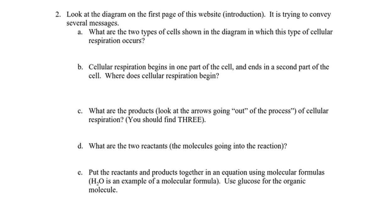 Cellular respiration webquestc google docs ccuart Choice Image
