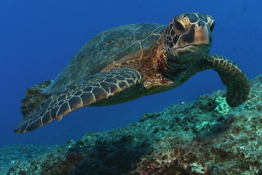Image result for sea turtles