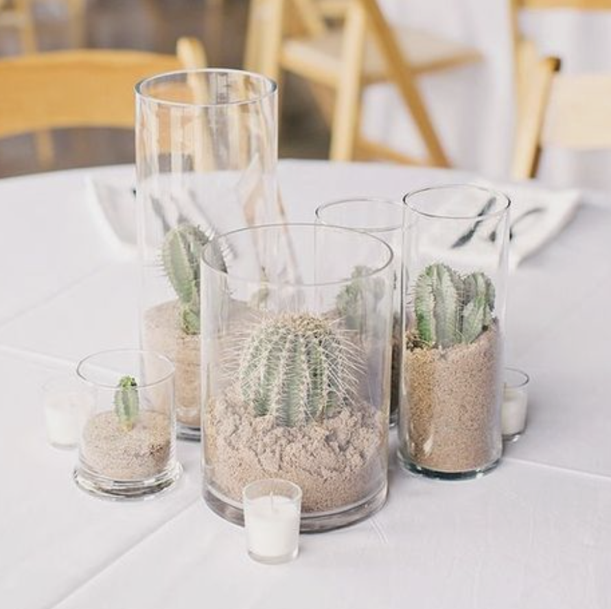 cactus display for wedding table decorations