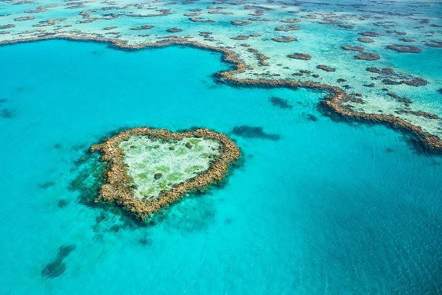 terumbu karang cantik