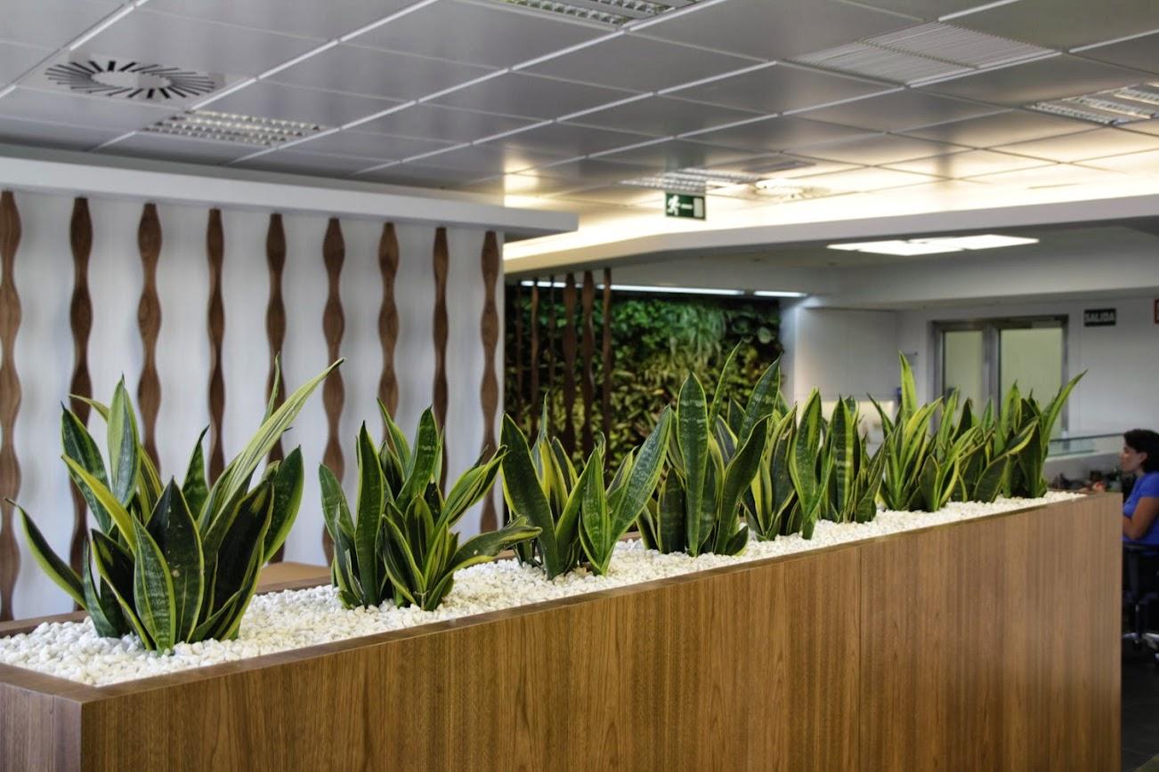 Jardines verticales y paisajismo en madrid for Jardin vertical oficina
