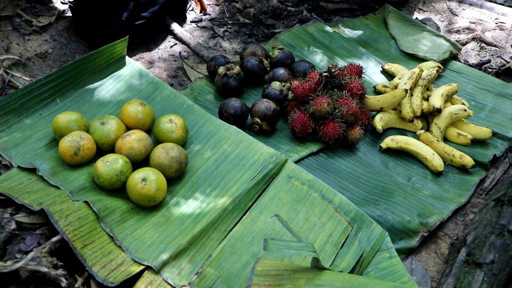 Jungle Trekking Experience in Bukit Lawang Sumatra