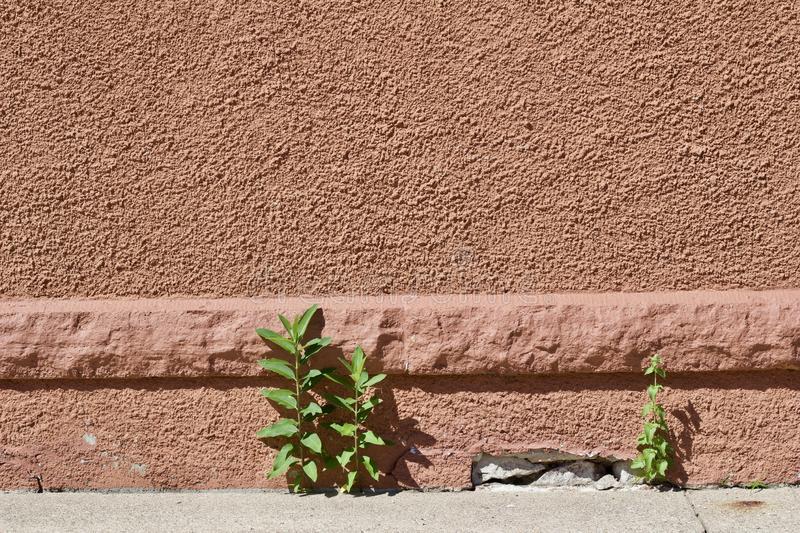 Sơn hiệu ứng Waldo-Bề mặt hoàn thiện Stucco hóa cứng gần như đá