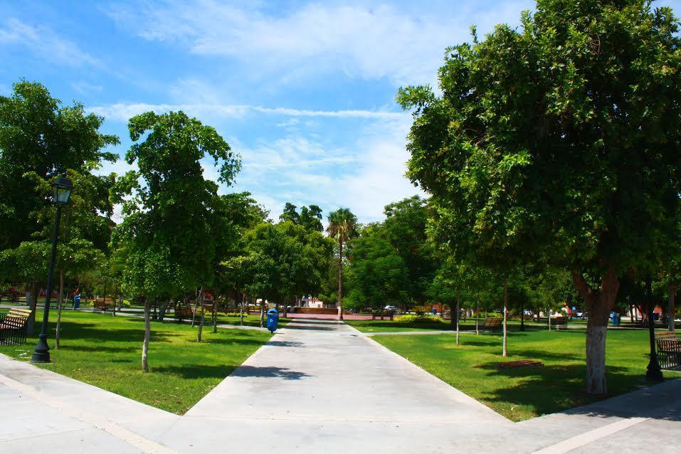 Imagen que contiene árbol, exterior, hierba, cielo  Descripción generada automáticamente