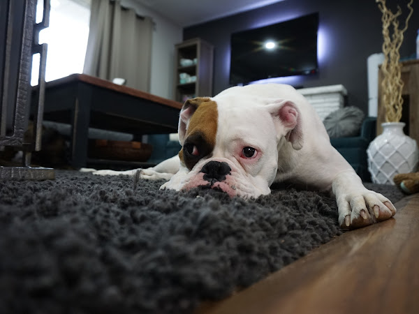 7 Secrets to Cleaning Up after Pets