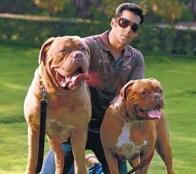 salman khan with his two dogs