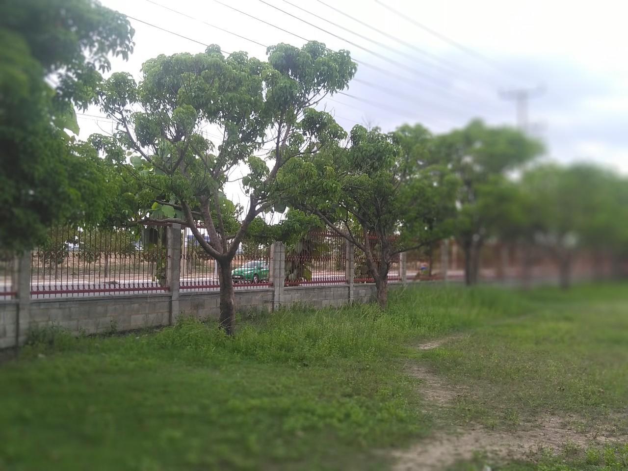 Cần phải trồng cây ở nơi có nhiều ánh sáng