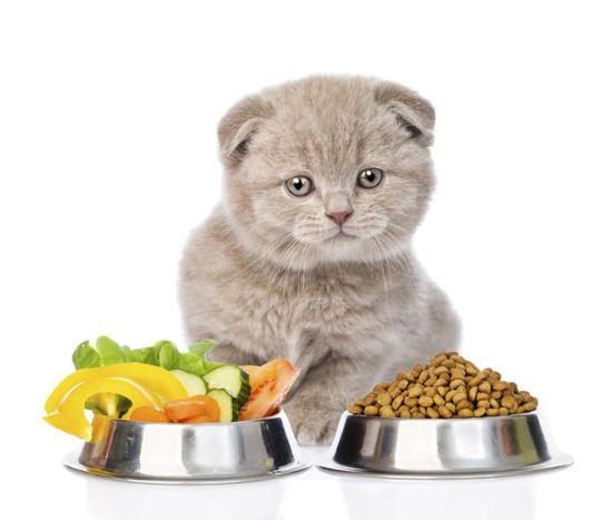 7+ loại thức ăn dinh dưỡng nhanh cho mèo bạn cần biết FThDe5ItB-hj1jRsKKgpiw9d5AZfaasfsViXLisxAAcu1_Dt4lXvDXg-e3HQHQ-vntu_wFAz3ttLmtA0WPyYTf5MvtbrpXQGV2IDw2-x8_sy9_n4QdXP9mJ9VYknK1zvQzQNaWLb