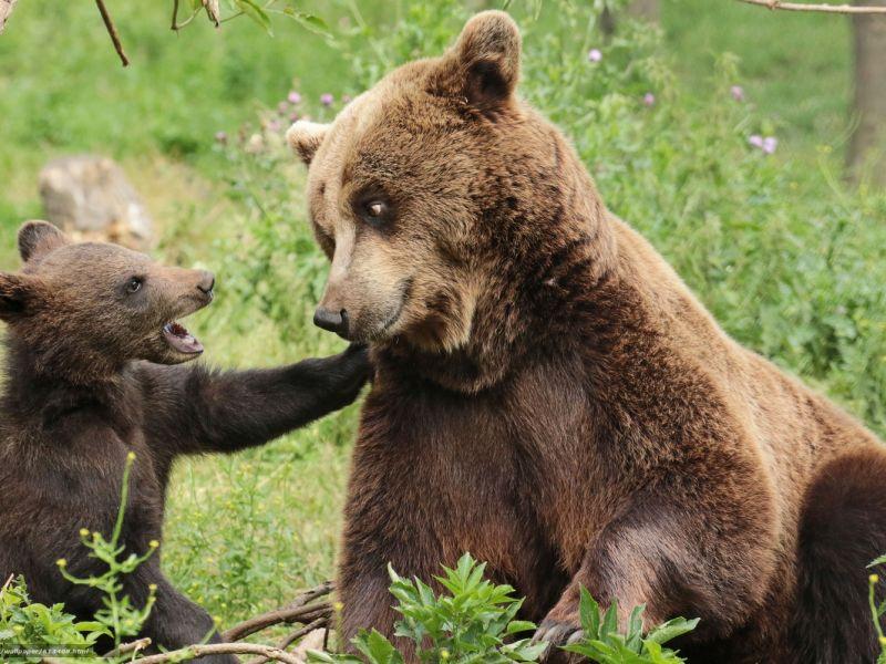 Жизнь медведей
