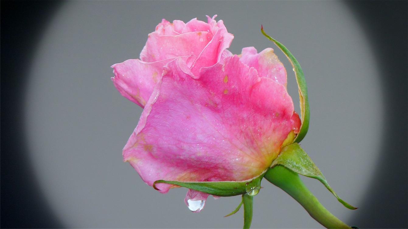 Prettiest Pink.jpg
