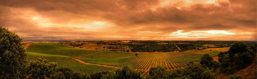 Vineyards Toro
